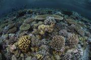Kaimana triton tour underwater