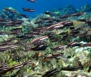 Paket Wisata Alor Island Pesona Indonesia Fototrip 3