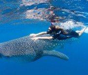 Paket Wisata Kepulauan Togean Pesona Indonesia - fototrip 5