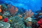 Paket Wisata Pulau Weh Sabang Aceh - Diving Pulau Weh