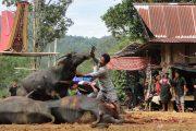 Paket Wisata Tana Toraja Pesona Indonesia-Foto Trip 2