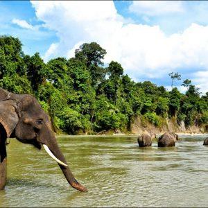 Paket Wisata Tangkahan Sumatera Utara Pesona Indonesia - fototrip 2
