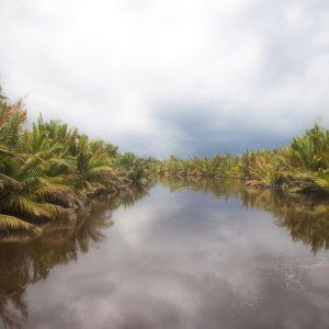Paket Wisata Tanjung Puting Orangutan Kalimantan Pesona Indonesia - fototrip 1