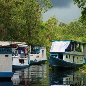 Paket Wisata Tanjung Puting Orangutan Kalimantan Pesona Indonesia - fototrip 4