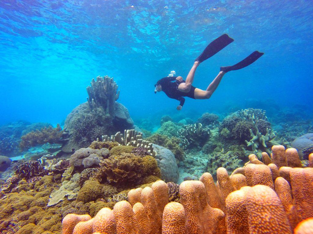 Snorkling dan Diving Labuan Bajo | Pesona Indonesia